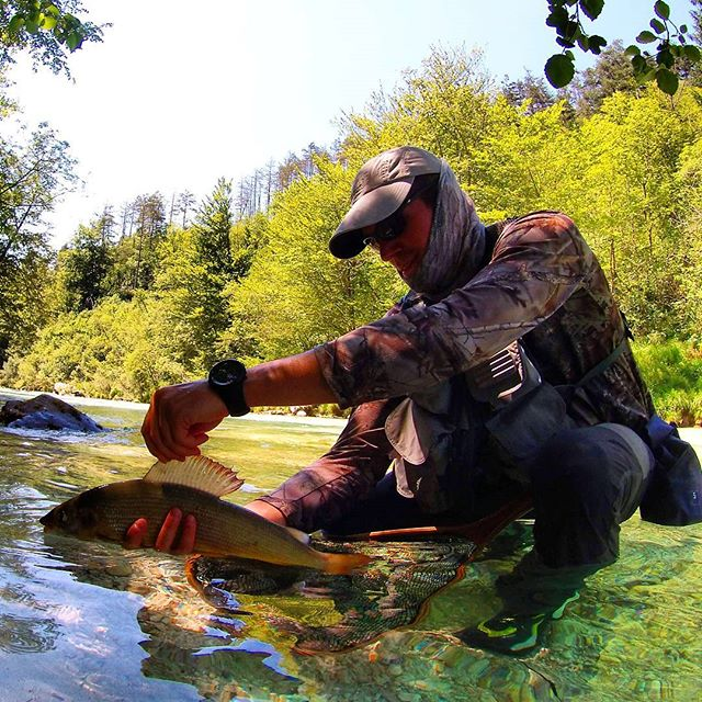 Pesca mosca timalo