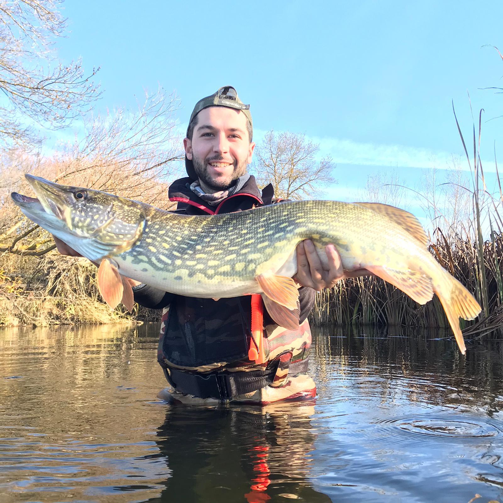 Pesca de lucios en freza en rio